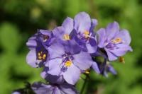 voorjaarsbloeiers-2