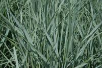 grassen-link